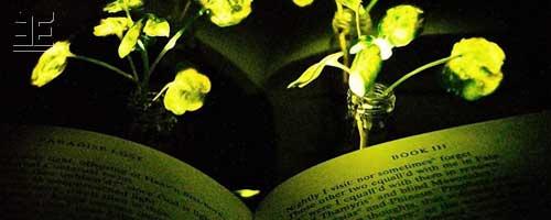 Созданы первые прототипы растений-светильников
